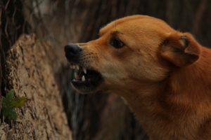 chien rage